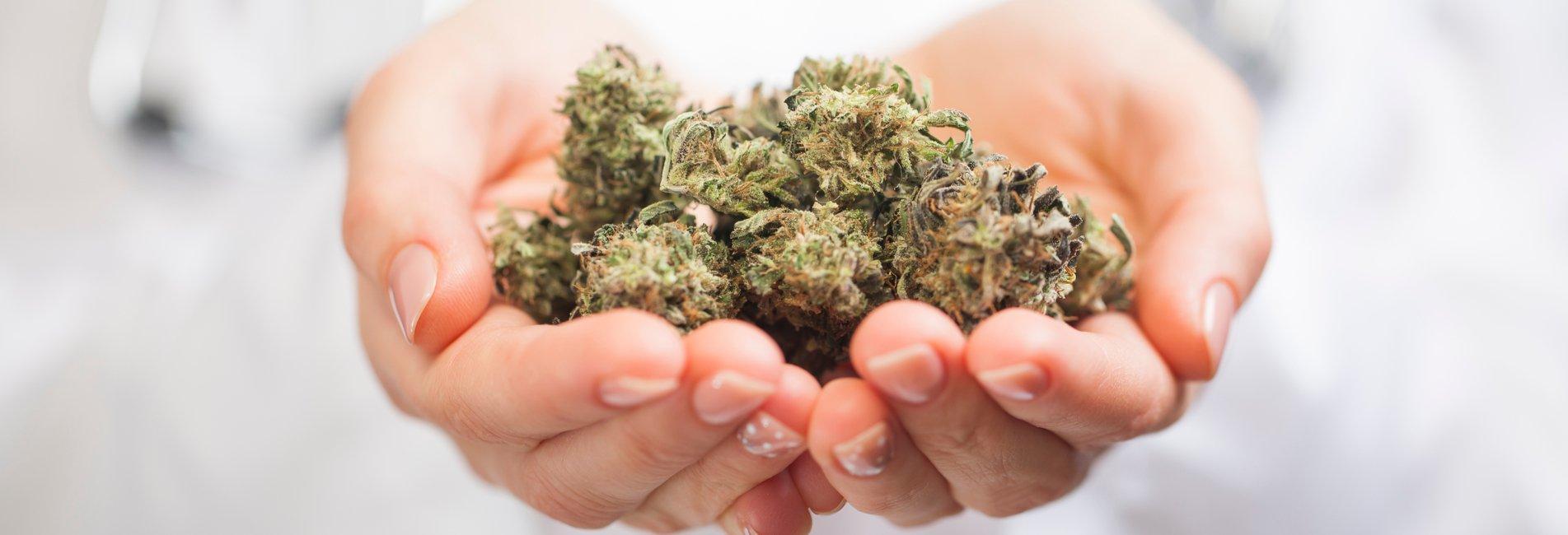 Marijuana Symptoms Signs Resurgence - An image of marijuana. It's very important to recognize marijuana symptoms and signs of addiction and then seeking help.